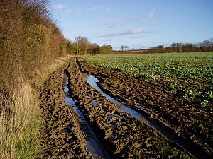 English: Muddy track near Sandons Farm. The so...