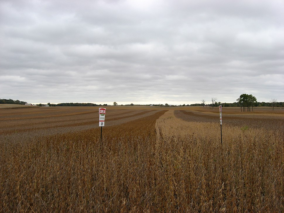 Multicolor soybeans in Hale Township