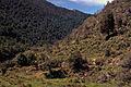 Murray Creek gold mine relics, Inangahua, West Coast, New Zealand, 1976 - Flickr - PhillipC.jpg