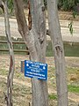 Murrumbidgee river flood marker.jpg