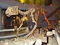 Museo del Desierto de Saltillo - panoramio (10).jpg