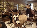 Museum Histoire Naturelle animals 1.jpg
