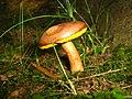 Mushroom (2744767915).jpg