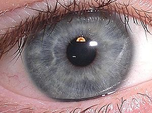 my eye