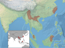 Myotis montivagus distribution (colored).png