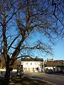 NÖ-Naturdenkmal KO-033 3 Winterlinden sl2.jpg
