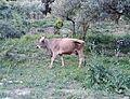 Nahal-Rosh-Pina-80139.jpg