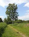 Nationaal Park Weerribben-Wieden. Gemarkeerd voetpad 02.JPG