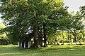 Naturdenkmal , zwei Linden.jpg