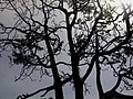 Nature in shadow 03.jpg