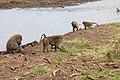 Nature of Ngorongoro Conservation Area (116).jpg