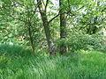 Naturschutzgebiet Heuckenlock 21.05.2014 22.JPG