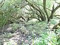 Naturschutzgebiet Heuckenlock 21.05.2014 Phase 104.JPG