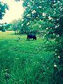 Naturschutzgebiet Reinheimer Teich 05.jpg