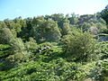 Near-Pateley-Bridge-05.JPG