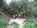 Nesher, Park Nesher, Wadi Katia 021.JPG