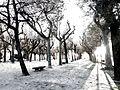No sé si nevó en Pontevedra (11234580635).jpg