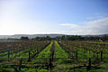 OIC swan valley vineyards.jpg