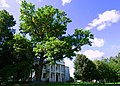 Oak (300 years). (3869201995).jpg