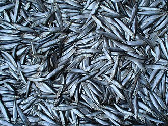Docosanoid - Oily fish are a rich source of the DHA from which Docosanoids derive