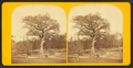 Old elm tree on Boston Common, by John B. Heywood 2.png