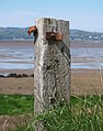 Old fence post, Lough Foyle - geograph.org.uk - 1859728.jpg