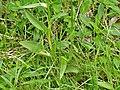 Orchidées Saint-Georges-Nigremont D32 près les Cantines (11).jpg