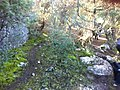Orman içi görüntü - panoramio.jpg
