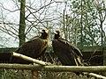 Ostrava, zoo,Sup hnedy.JPG