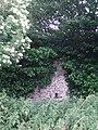 Overgrown - geograph.org.uk - 191684.jpg