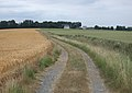 Oxlands Hill, Welwick - geograph.org.uk - 198675.jpg
