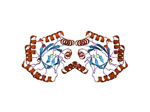 3-dehydroquinate dehydratase - The structure of type i 3-dehydroquinate dehydratase from salmonella typhi