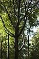 PM 112974 B Koppenberg.jpg