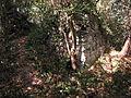 PP Čičovický kamýk, kamená konstrukce na vrcholu (002).JPG