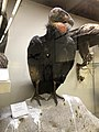 Pacific Grove Museum of Natural History - Stierch - 2018 01.jpg