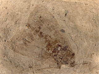 <i>Paleolepidopterites</i> Extinct fossil genus of tortrix moths