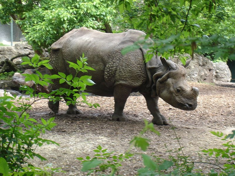 Basel - Zoo