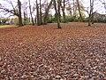 Park Leaves - geograph.org.uk - 1580616.jpg