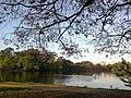 Parque Ibirapuera - panoramio (1).jpg