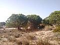 Parque de Doñana 20210610 18.jpg