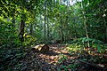Path in the rainforest.jpg