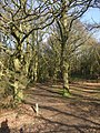 Path through Hainault Forest Country Park (1) - geograph.org.uk - 1650625.jpg