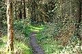Path to Slievenaslat (2) - geograph.org.uk - 1246582.jpg