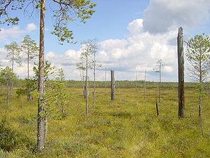 Patvinsuo National Park - Image: Patvinsuo kohosuota