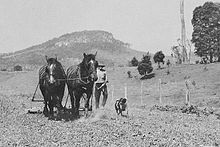 Cattle dog walking beside a plough drawn by two horses
