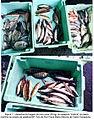 Pesca marinha (5257756304).jpg