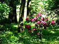 Piękny pszczyński park 01.jpg
