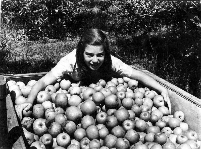 ילדה ותפוחי עץ
