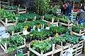 Plants at Spice Bazaar - panoramio.jpg