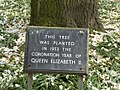 Plaque beside tree which was planted in 1953 at the time of the coronation of Queen Elizabeth II.jpeg